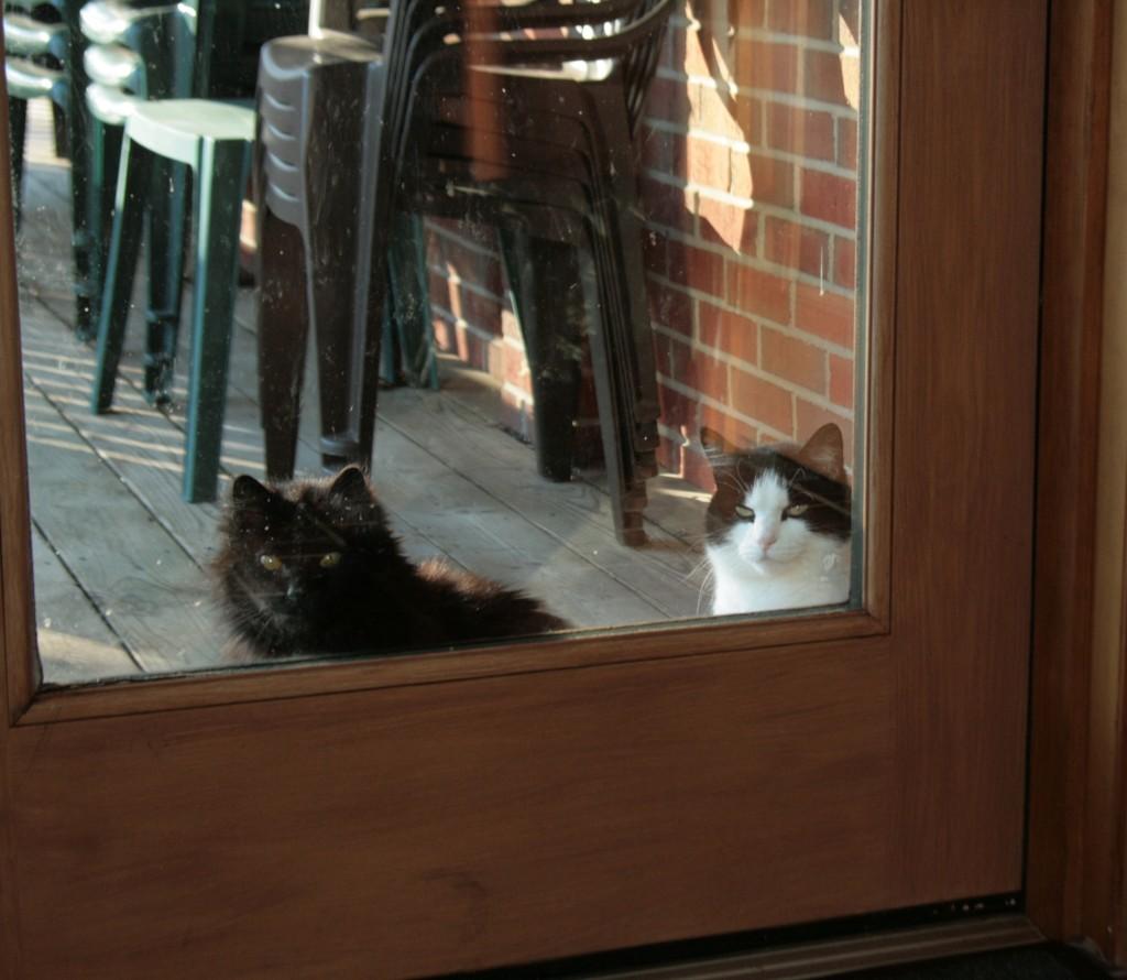monastery cats